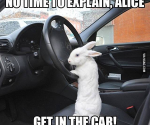 funny, rabbit, and alice image