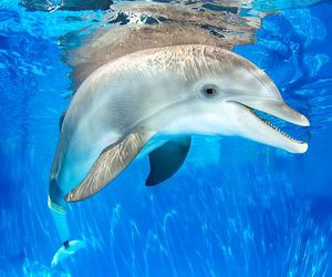 winter, dolphin, and dolphin tale image