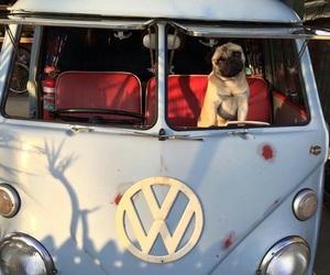 pugs and volkswagen image