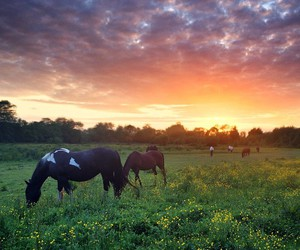 countryside, horses, and nature image