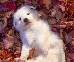 dog, cute, and fall image