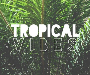 tropical, summer, and vibes image