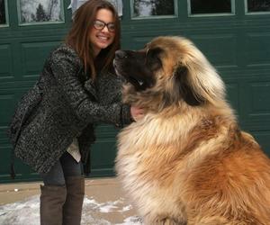 dog, big, and animal image