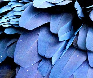 blue and feather image