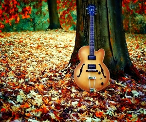 autumn, music, and guitar image