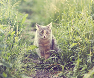 bokeh, cat, and grass image