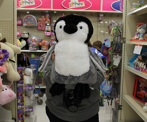 penguin, photography, and cute image