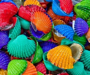 shell, colorful, and colors image