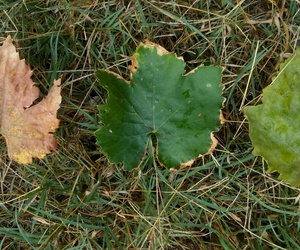 autumn, leaf, and green image