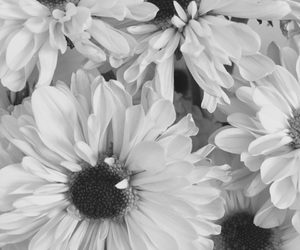 alternative, beautiful, and black and white image