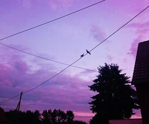sky and purple image