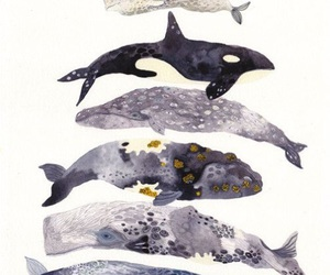 whale, art, and animal image