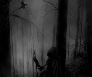death, dark, and forest image