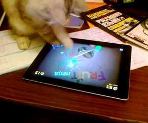 cat, video, and ipad image