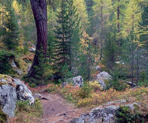 adventure, colorful, and forest image