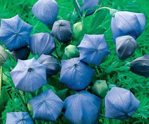 balloon, blue, and flowers image