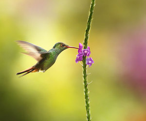 bird, nature, and flowers image