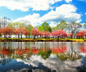 autumn, fall, and reflection image