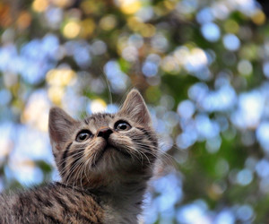animal, bokeh, and cat image