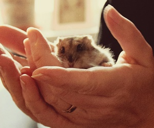 hamster, love, and cute image