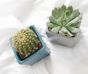cactus, aesthetic, and plants image