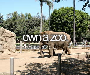 before i die and zoo image