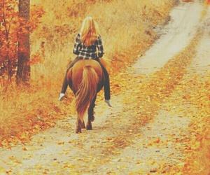 horse, autumn, and fall image