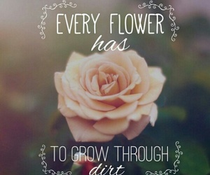 beautiful, flower, and quote image