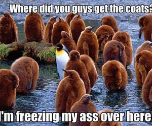 funny and penguins image