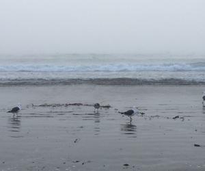 beach, birds, and fog image