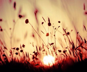 sun, sunset, and flowers image