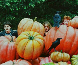 harry potter, hermione granger, and pumpkin image