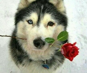 dog, rose, and snow image