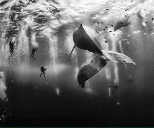 whale, sea, and black and white image