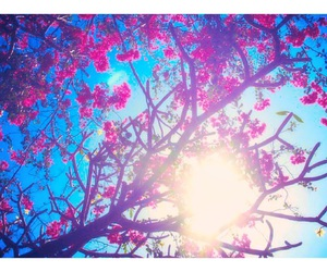 flower, trees, and tumblr image