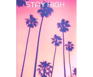 palms, pink, and tumblr image