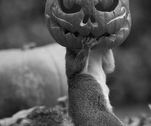 Halloween, squirrel, and autumn image