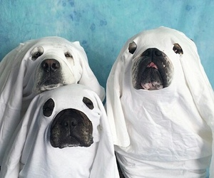 chien, Halloween, and déguisement image