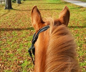 autumn, fall, and horse image