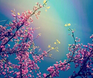 beautiful, flowers, and background image