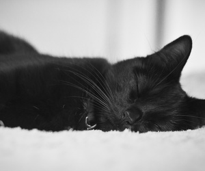 black, cat, and sleep image
