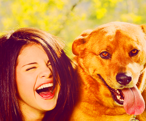 dog, brown eyes, and laugh image