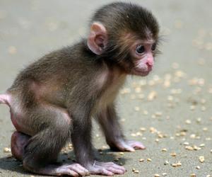 monkey madness image