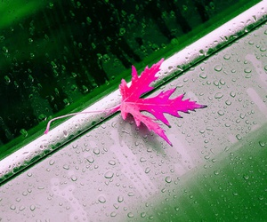 leaf, rain, and photography image