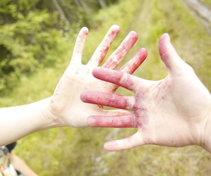 blueberry, forest, and hands image