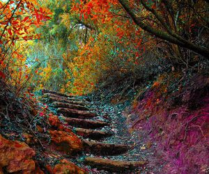 nature, autumn, and stairs image