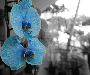flowers ; orchidee; image