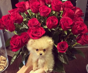 dog, roses, and vogue image