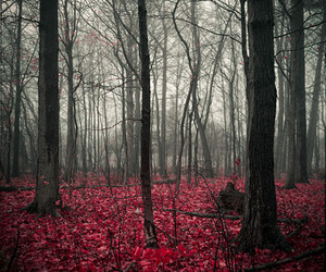national geographic and woods image