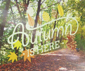 autumn, laub, and Herbst image